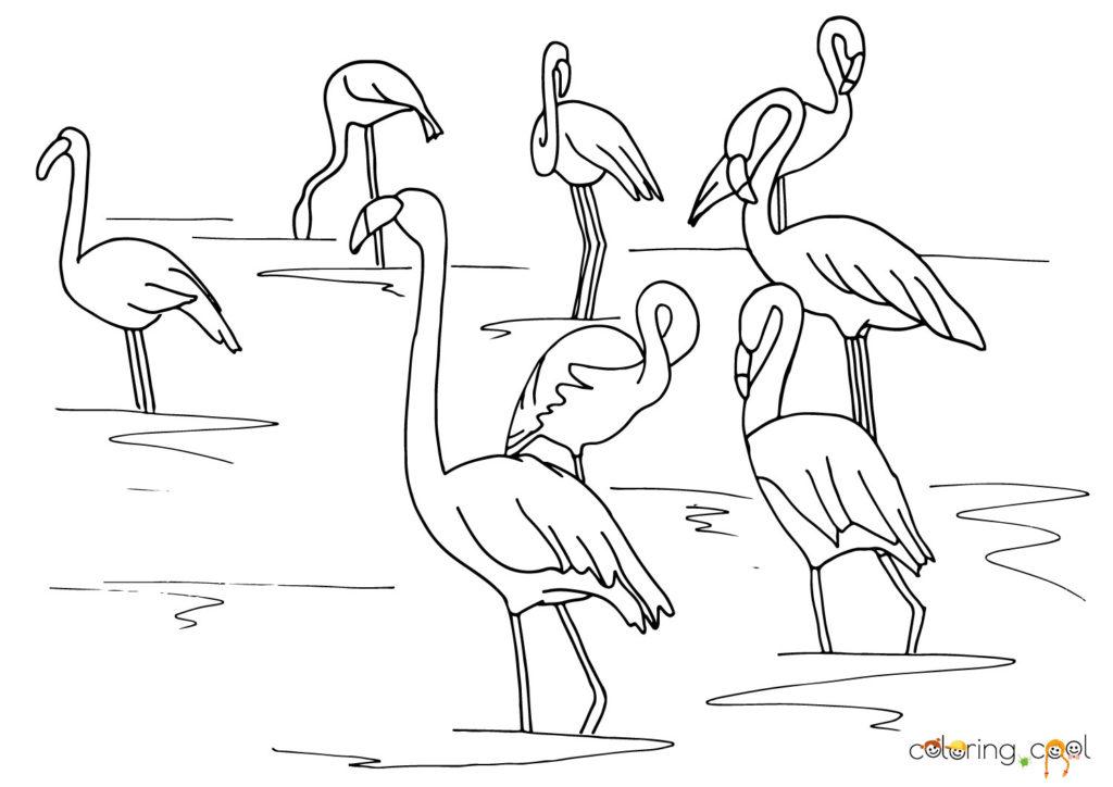 Džeimsa flamingi